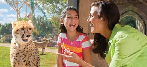 Get up close with cheetahs and other fascinating animals at Busch Gardens Tampa Bay