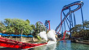 Sheikra Floorless Dive Roller Coaster Busch Gardens Tampa Bay