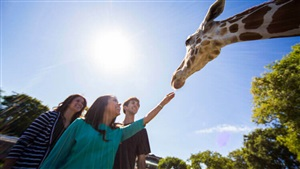 Book a Serengeti Safari at Busch Gardens Tampa Bay