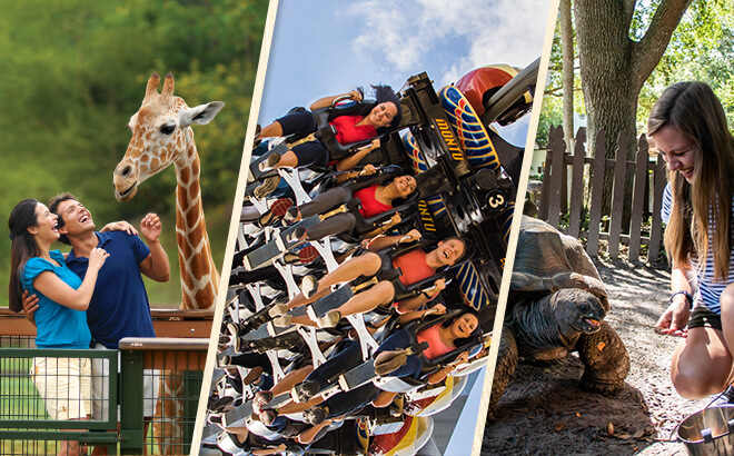 Upgrade your day at Busch Gardens Tampa Bay with a Serengeti Safari, All-Day Dining Deal or skip the lines with Quick Queue