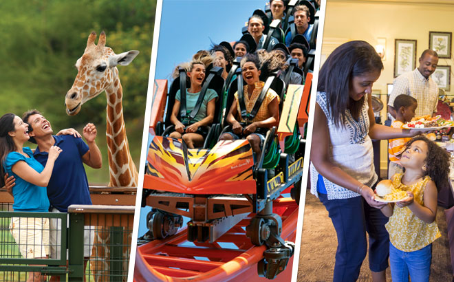 All Inclusive Upgrade at Busch Gardens Tampa Bay located in Florida