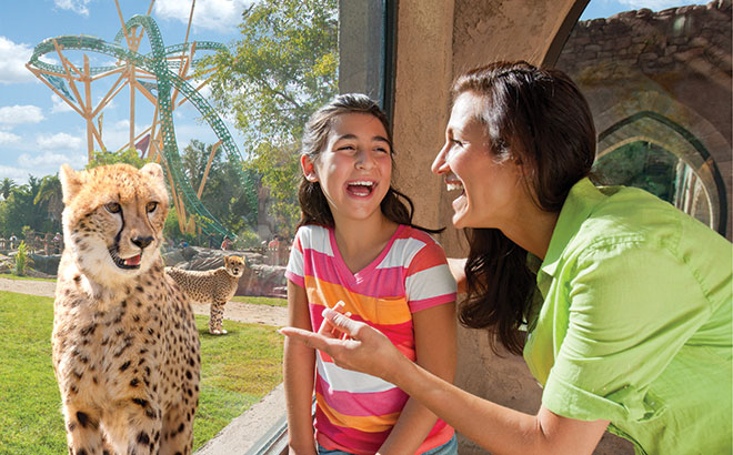 A mother and daughter smile at a cheetah at Cheetah Hunt in Busch Gardens Tampa Bay