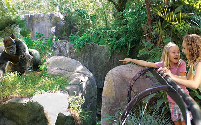 Two young guests enjoy a gorilla exhibit at Busch Gardens Tampa Bay in Florida