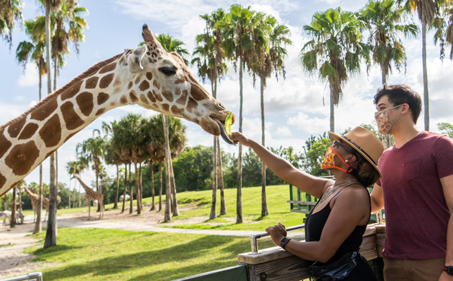 Guests at Busch Gardens can now make their Serengeti Safari Tour reservations