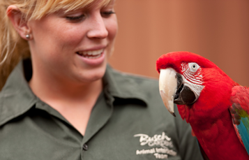 Educational Networking Programs for Teacher Busch Gardens Tampa Bay
