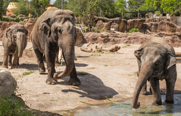 Elephant Insider Tour at Busch Gardens Tampa Bay