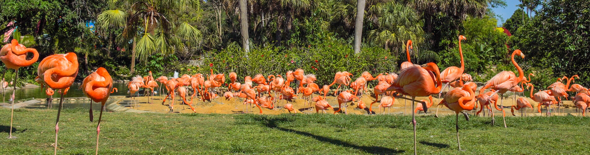 Flamingos and Other Birds at Busch Gardens Tampa Bay