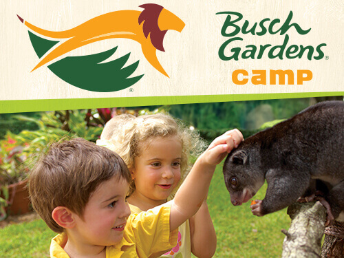 Grades K 2 Summer Camps Busch Gardens Tampa Bay