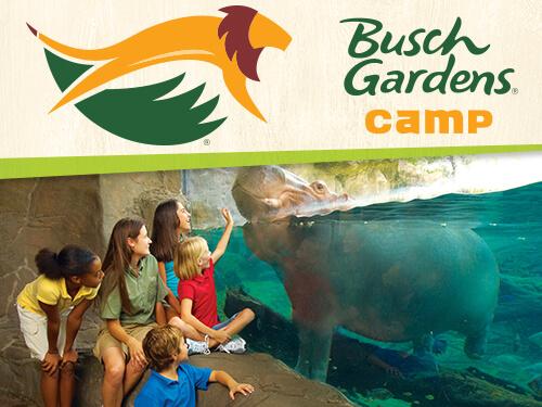 Grades 3 4 Summer Day Camps Busch Gardens Tampa Bay