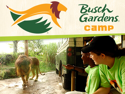 Grades 10 College Summer Resident Camps Busch Gardens Tampa Bay
