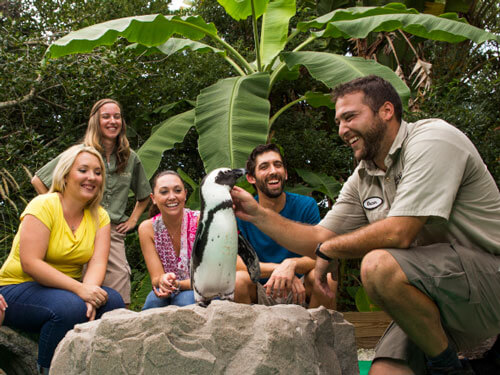 Visit Learn About Penguins At Busch Gardens Tampa Bay