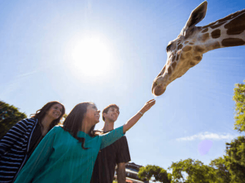 Busch Gardens Tampa Bay Tour Keeper for a day