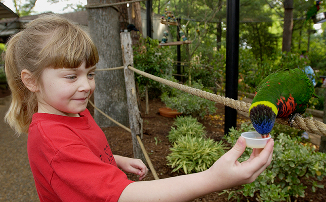Take your time to explore and take in the natural beauty of Busch Gardens