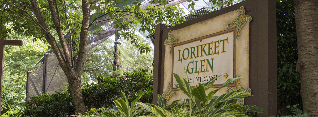Come to Lorikeet Glen to see and hear our birds!