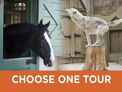 Busch Gardens Williamsburg Animal Tours